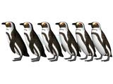 penguin row poster
