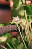 smiling frog poster