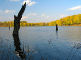 autumn view of lake and forest poster