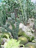 cactus series 3 poster