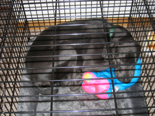 poster of dog sleeping in metal kennel