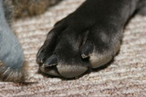 dog paw poster