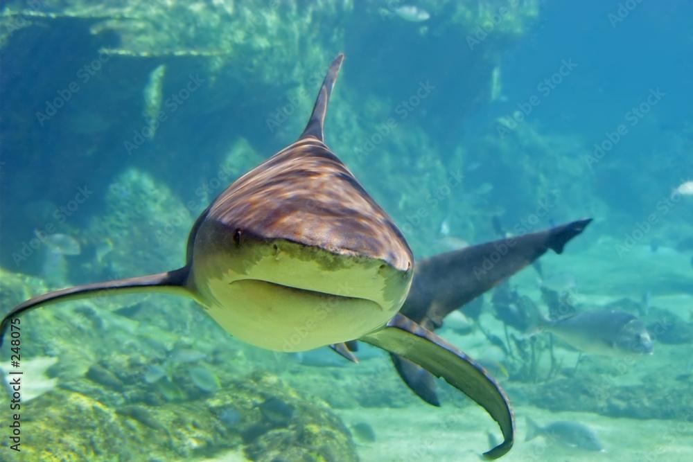 koral nurkowanie ryba - powiększenie