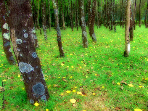 canvas print picture forest