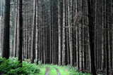 trees and forest poster
