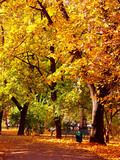park alley in  fall colors poster