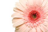 pink daisy poster