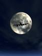 moonshine and plane