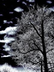 tree   cloud  winter