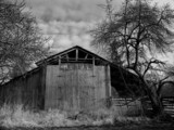 barn, black and white poster