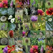 nature collection - photo collage