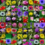 floral collage 4 - spring flower collection poster
