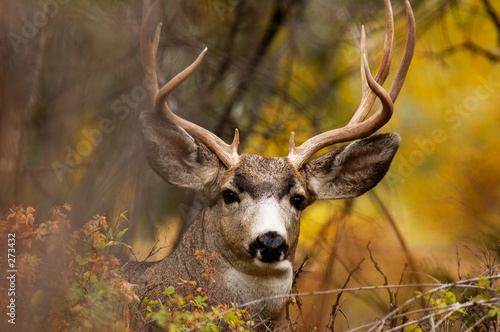 deer during fall