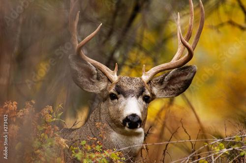 deer during fall