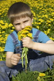 boy on dandelion lawn poster