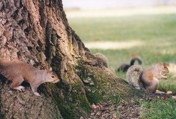 squirrels searching