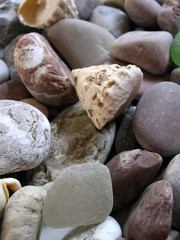 stone and shells