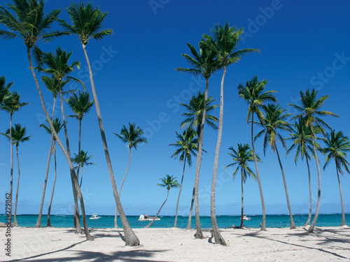 Leinwandbild Motiv punta cana beach