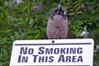 bird does not smoke
