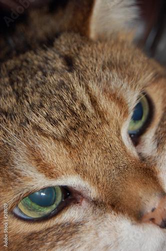 mycat1