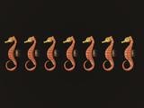 seahorse row - copy space poster