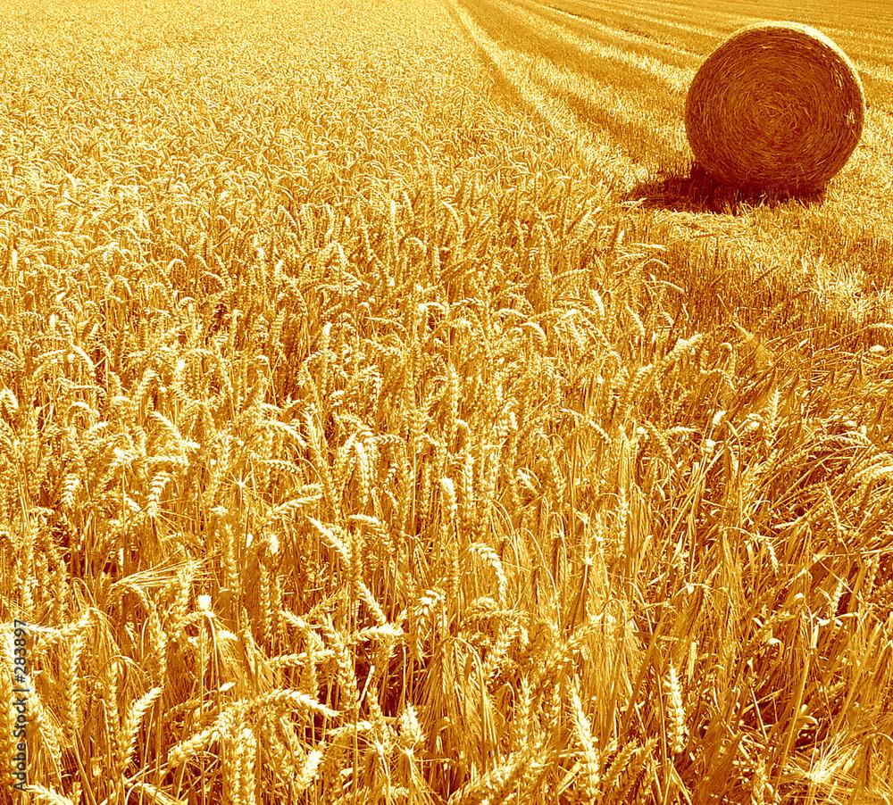 kukurydziany ściernisko beli - powiększenie