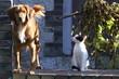 Leinwandbild Motiv chien et chat