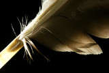 macro feather poster