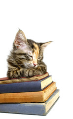 gato y libros