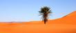 palmier au milieu du désert