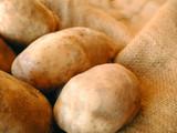 potatoes in a burlap potatoe bag poster