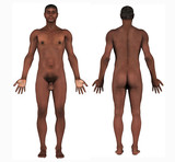 human anatomy - african male poster