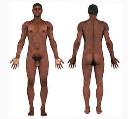 human anatomy - african male