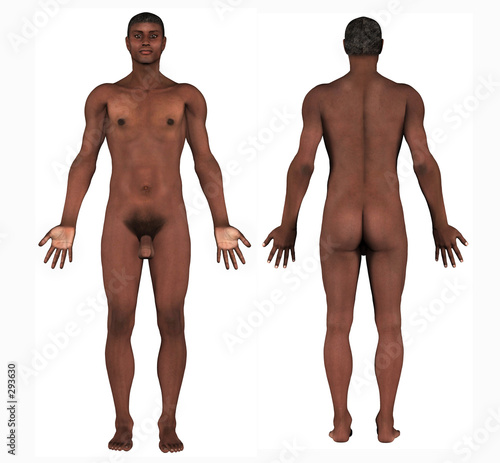human anatomy - african male