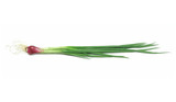 a bundle of green onion poster