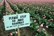 pink tulip field with sign