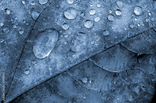 leaf & water droplets