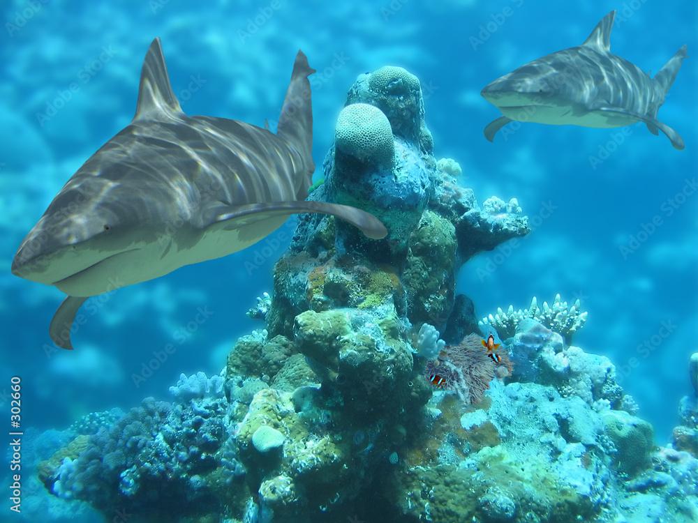 ryba rafa szary - powiększenie