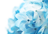 Fototapeta niebieski - rozmycie - Kwiat