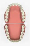3d dental chart poster