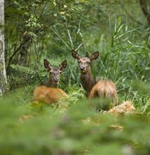Zwierzęta z lasu