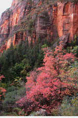 autumn colors in zions a
