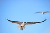 seagull landing poster