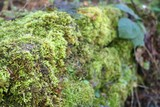moss on wall poster