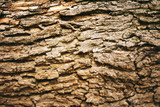 brown tree bark poster