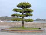 japanese tree poster