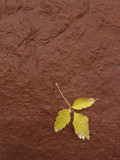 yellow leaf on red rock poster