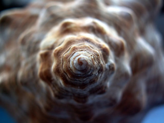 ocean snail shell