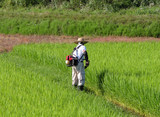man working in the rice field poster