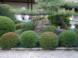 japanese garden close-up poster